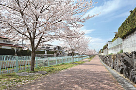 北斗川沿いの桜並木