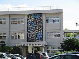 愛知小学校