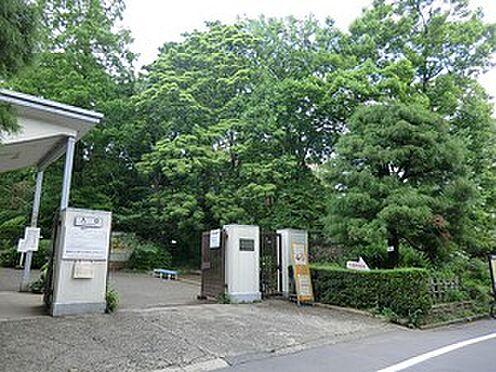 マンション(建物一部)-文京区白山2丁目 周辺環境:小石川植物園