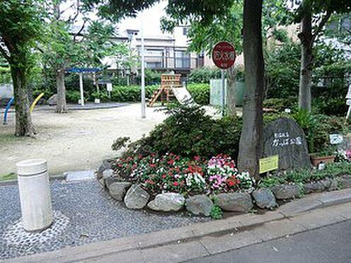 マンション(建物全部)-杉並区成田東4丁目 周辺環境:かっぱ公園