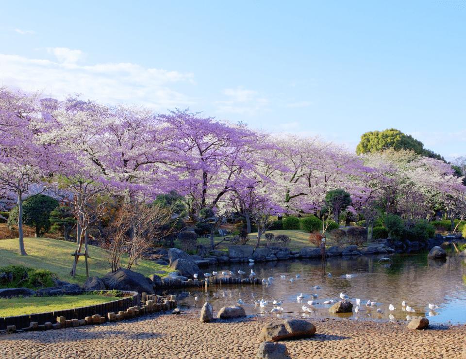 隅田公園 約1,560m(徒歩20分)