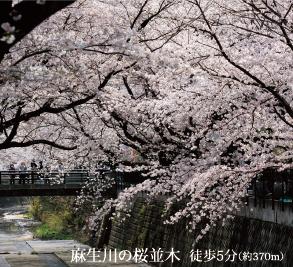 麻生川の桜並木 約370m(徒歩5分)