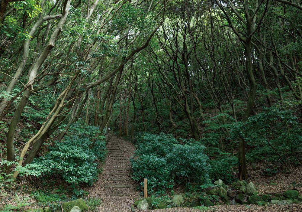 鴻巣山緑地 約360m(徒歩5分)