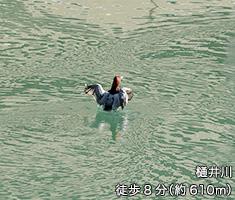 樋井川 約610m(徒歩8分)
