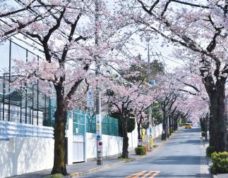 神学院前の桜並木 約80m(徒歩1分)
