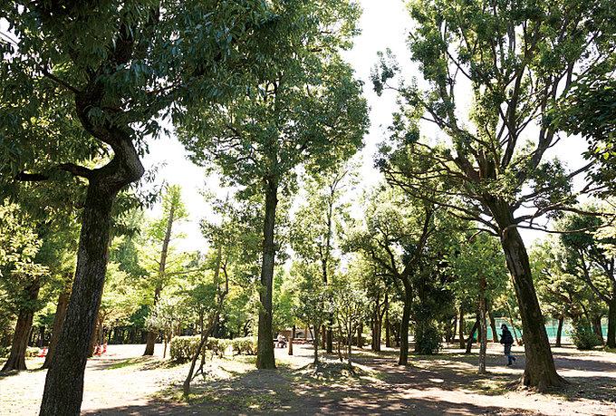 羽根木公園 約680m(徒歩9分)