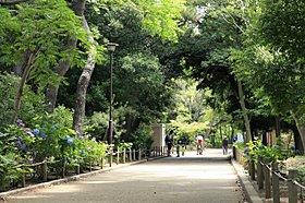 緑に囲まれた昆陽池公園。