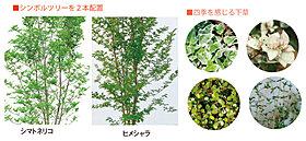 敷地内にはシンボルツリーを植栽。