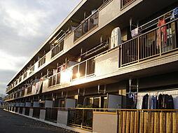東京都あきる野市油平の賃貸マンションの外観