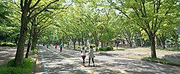 緑豊かな公園