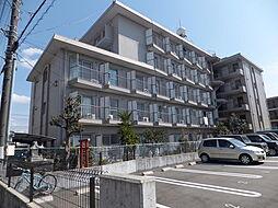 静岡県三島市西本町の賃貸マンションの外観