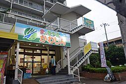 千葉県市川市鬼高3の賃貸アパートの外観