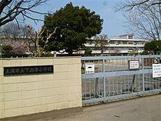 土浦市立下高津小学校(558m)