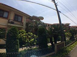 千葉県柏市新富町1丁目の賃貸マンションの外観