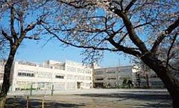 小学校杉並区立松ノ木小学校まで1546m