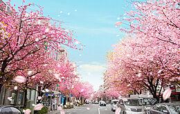 桜並木通り、閑静な住宅街です。前面道路は車通りも少なく静かです。