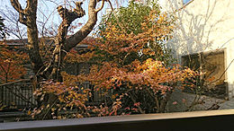 バルコニーからの眺望です。春になると立派な桜の木がとてもきれいです。