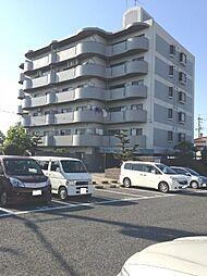 大阪府泉南市信達市場の賃貸マンションの外観
