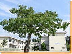 根川小学校 600m