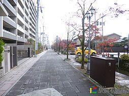 カンフォーラ松原[4階]の外観