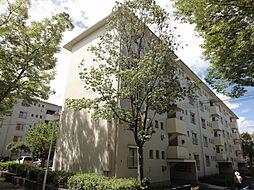 金剛第三住宅223棟[5階]の外観