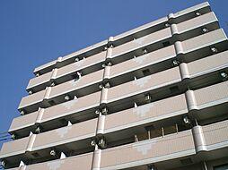 ベルフレージュ住吉[5階]の外観