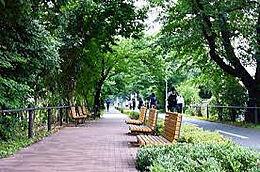 新日本歩く道100選に認定された小平グリーンロード